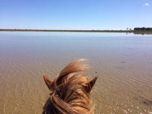 til hest i Bouet